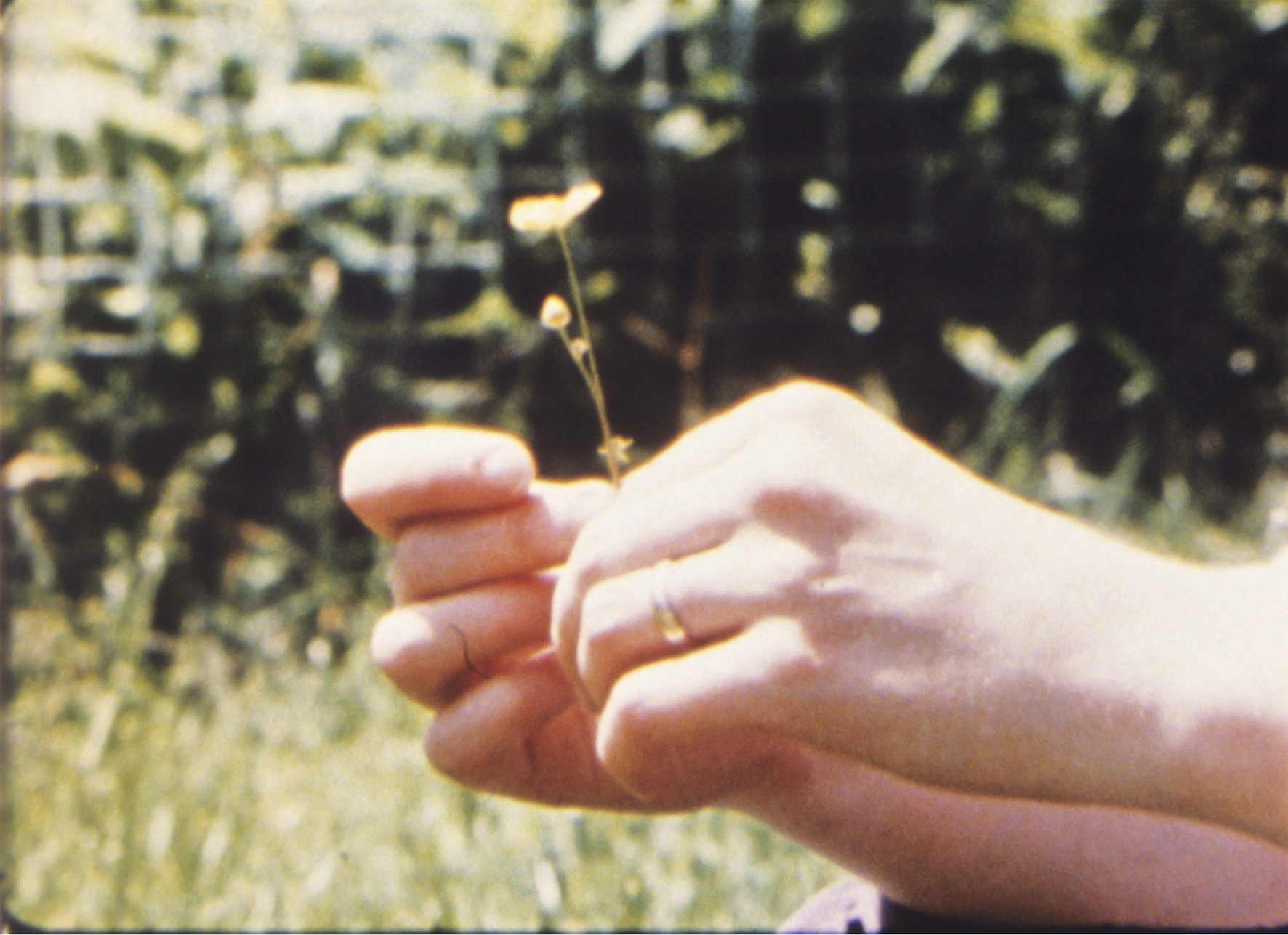 Jonas Mekas »As I was moving ahead occasionally I saw brief glimpses of beauty« (filmstill) , 2000